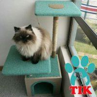 TIK - Mascotas Felizes